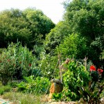 Permaculture: Off Grid Living in Portugal