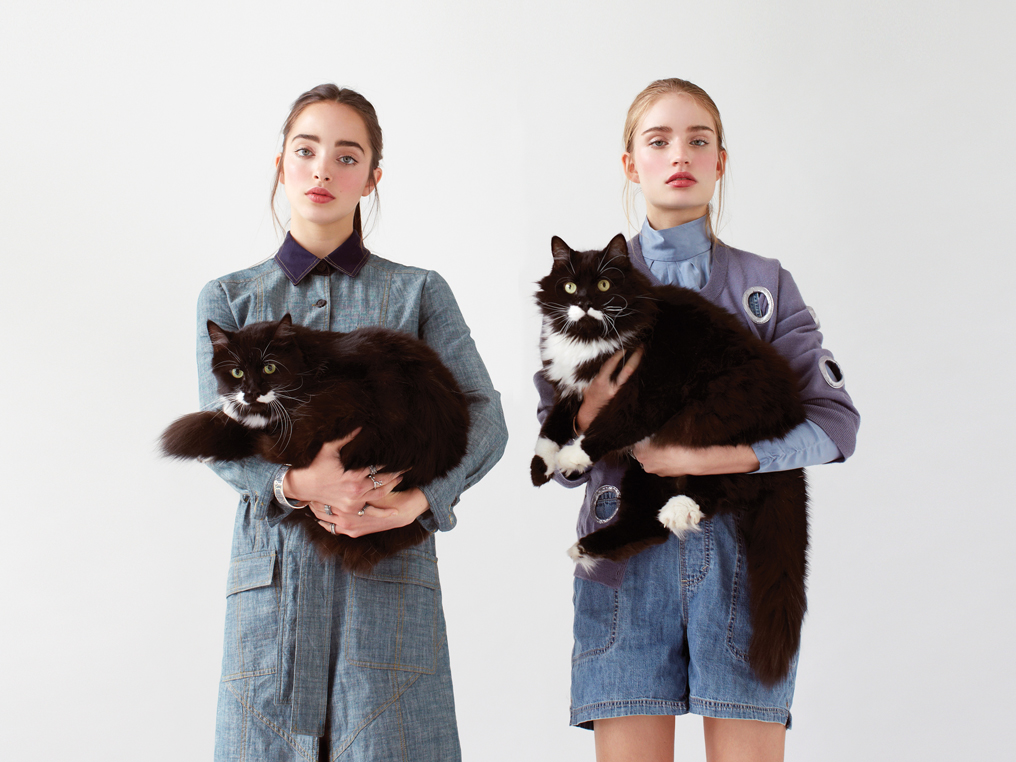 Siamese Cats Fashion Editorial